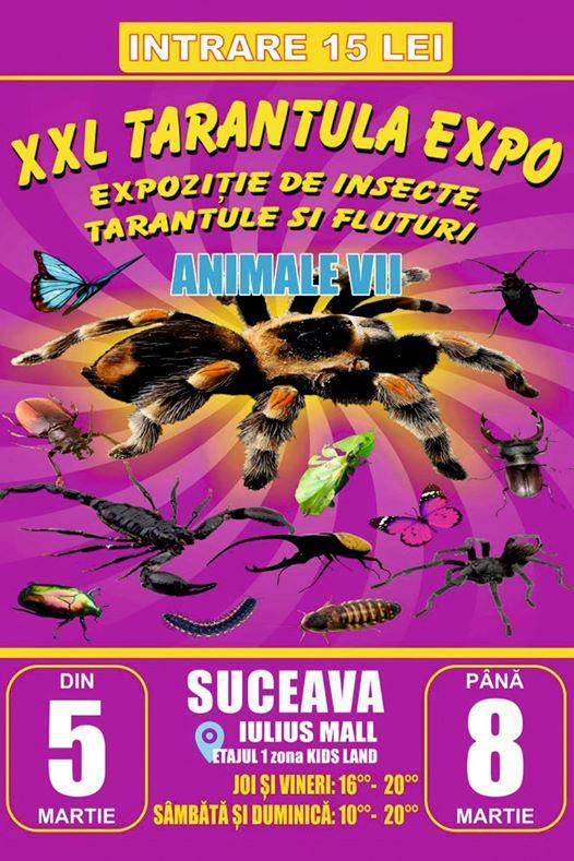 XXL Tarantula Expo