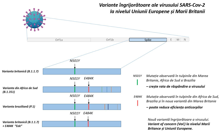 Noua tulpină SARS-CoV-2, ce prezintă și mutația E484K, depistată în România, pe baza secvențierilor efectuate la Universitatea Ștefan cel Mare din Suceava
